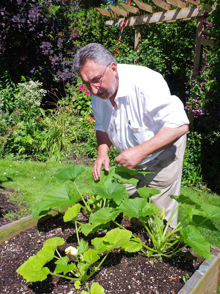 Owner Herve Martin Harvesting Home Garden Vegetables